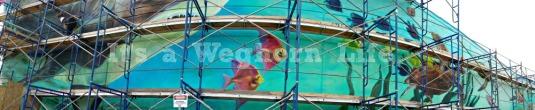 Visit the Sharkwall at the Newport Aquarium